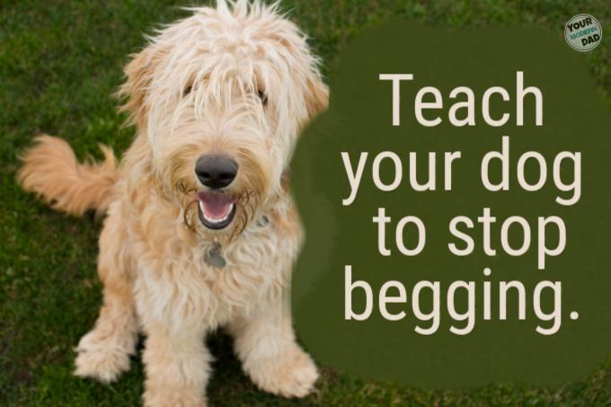 teaching dog to stop begging